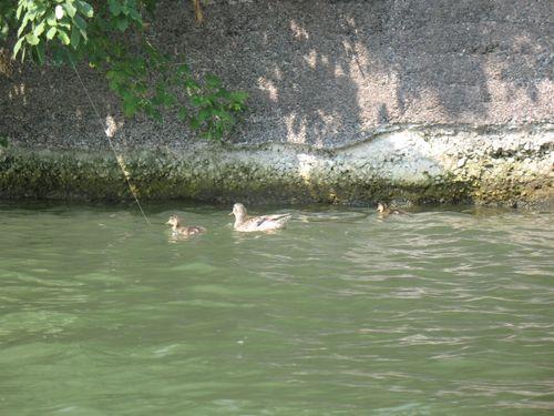 Aug 15 paddle 042
