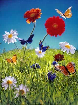 Af605flowersandbutterfliesposters